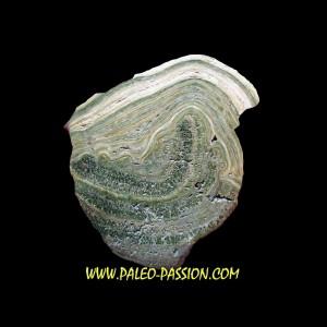 Stromatolithe eocene - Wyoming USA