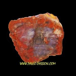 bois fossile silicifié  ARAUCARIA (Vosges) -1-