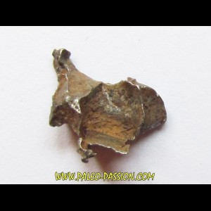 METEORITE pallasite IMALAC (6)