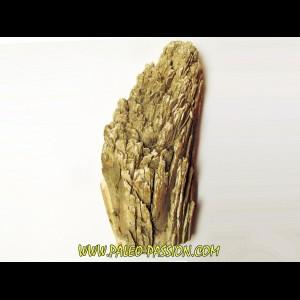 IVOIRE DE MAMMOUTH  -8-
