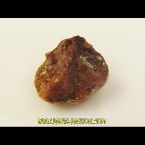 AMBER fossile d'ARCHINGEAY (4)
