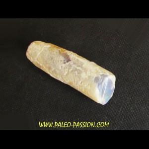 fossile opalisé: BÉLEMNITE sp. (2)