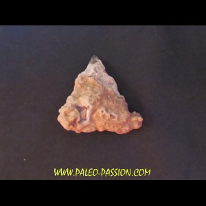 shark  tooth  Fully coated  of a crusting of coral (3)