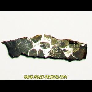 METEORITE pallasite seymcham (4)