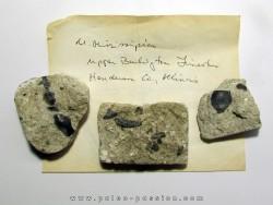 set of primitive shark teeth