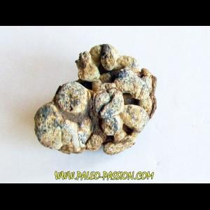 METEORITE pallasite SERICHO (1)