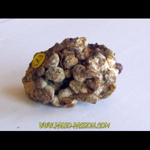 METEORITE pallasite SERICHO (3)