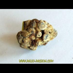 METEORITE pallasite SERICHO (4)