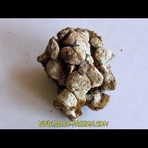 METEORITE pallasite SERICHO (5)