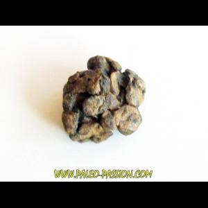METEORITE pallasite SERICHO (9)