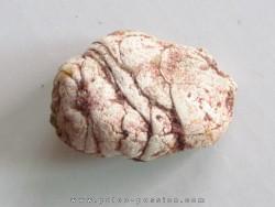 coprolith - cretaceous - kem-kem - MOROCCO (1)