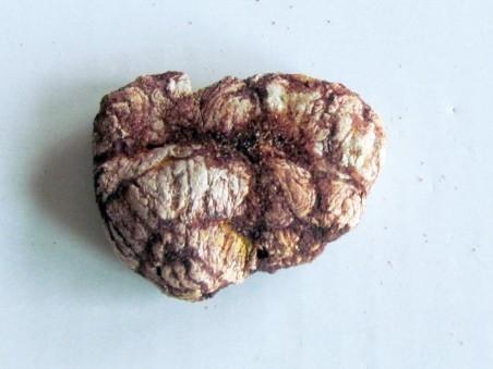 coprolith - cretaceous - kem-kem - MOROCCO (6)