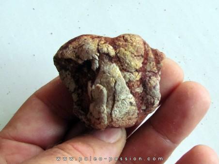 coprolith - cretaceous - kem-kem - MOROCCO (9)