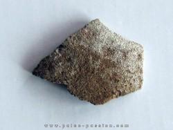 dinosaur saltasaurus egg shell (7)
