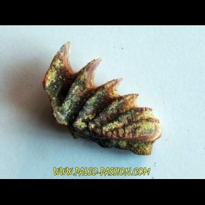 neoceratodus africanus (1)