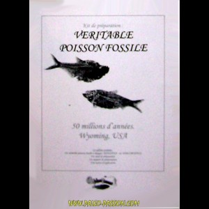 kit de preparation: poisson fossile a degager