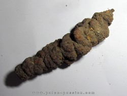 coprolithe - cenozoique - madagascar (5)