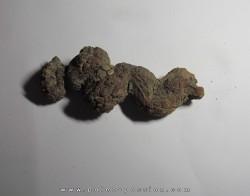 coprolithe - cenozoique - madagascar (9)