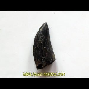 tyrannosaure rex (1)