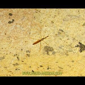 arachnide indeterminée AIX EN PROVENCE