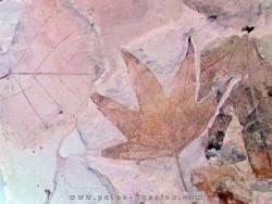 Sycamore - Platanus wyomingensis - Populus willmattae