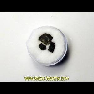 dinosaur maiasaura egg shell (7)