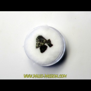 dinosaur maiasaura egg shell (14)