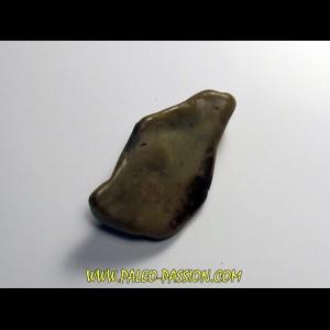 gastrolithe de dinosaure hadrosaure (6)