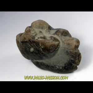 eryops megacephalus coprolithe