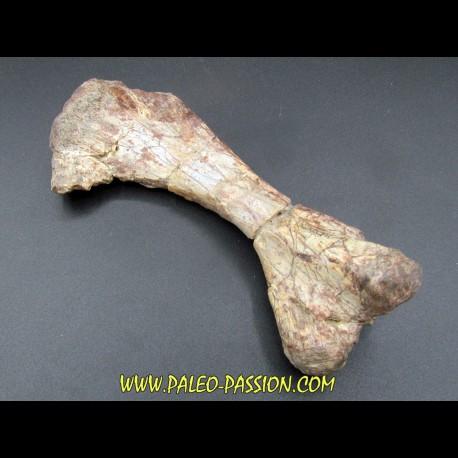 phytosaur bone