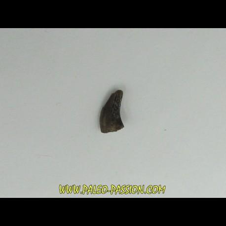Kilestus aristotocus