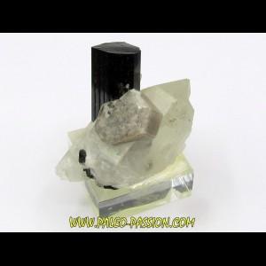 Tourmaline schorl, apatite & Quartz - Minas Gerais - Bresil