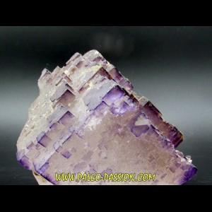 Fluorine violette du Maroc