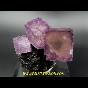 purpple fluorine violette on sphalerite - elmwood USA