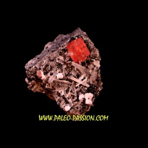 Rhodochrosite - Quartz // Sweet home - Colorado - USA