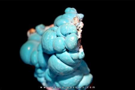 chrysocolle  M fouati - République du Congo