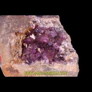 Fluorine violette - Bergheim, Alsace