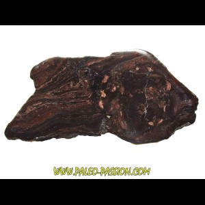 Stromatolithe - Missouri (1)