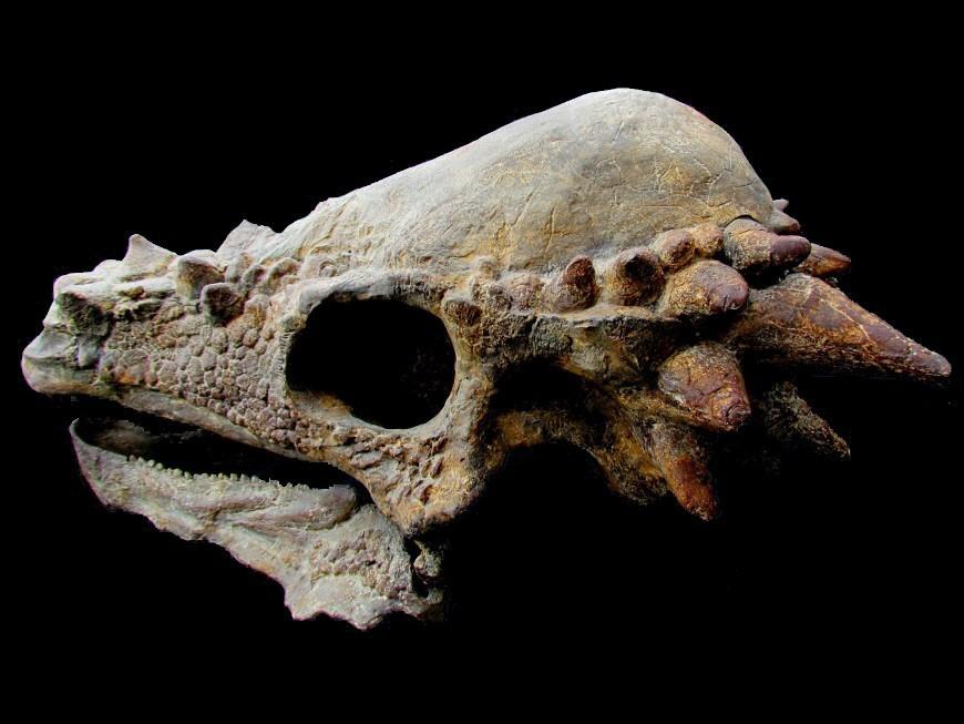 Sélection fossiles
