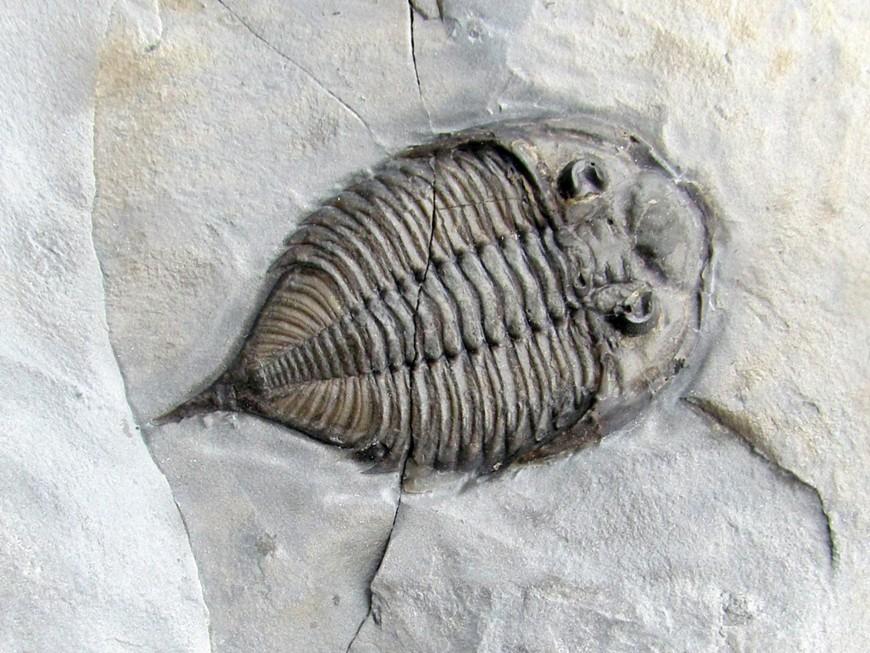 Trilobites USA