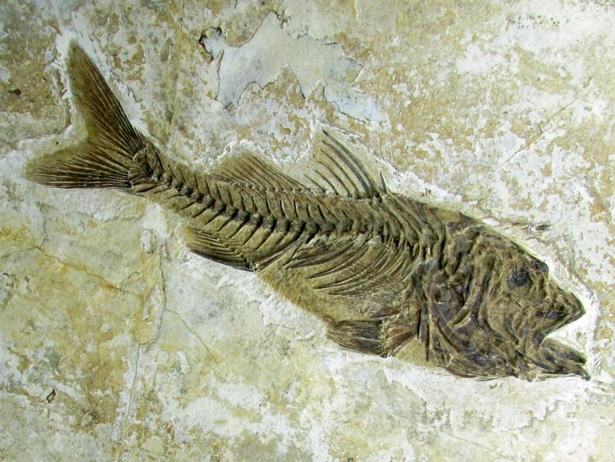 Fossiles de FRANCE