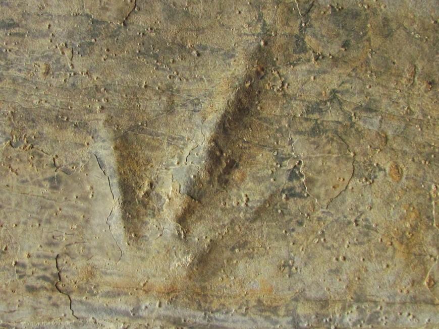 Oeufs et traces